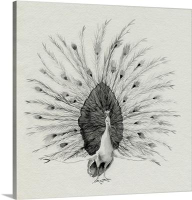 Ebony Plumed Peacock I