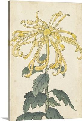 Elegant Chrysanthemums II