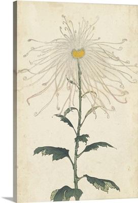 Elegant Chrysanthemums V