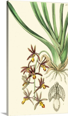 Elegant Orchid II