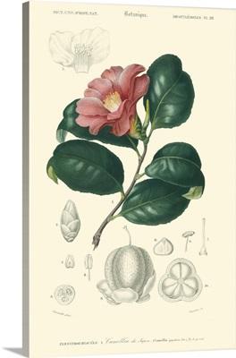 Embellished Floral Botanique II