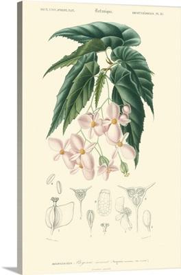 Embellished Floral Botanique III