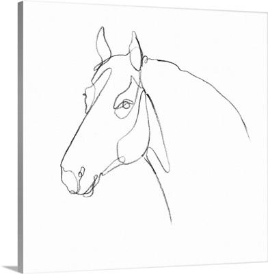 Equine Pencil Contour III
