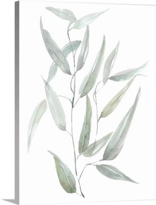 Ethereal Eucalyptus I