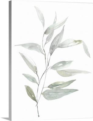 Ethereal Eucalyptus II