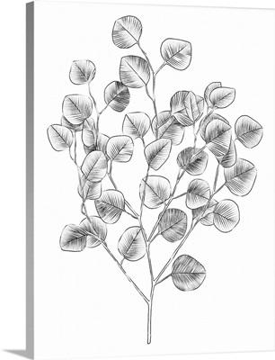 Eucalyptus Sketch I