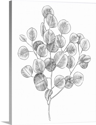 Eucalyptus Sketch II