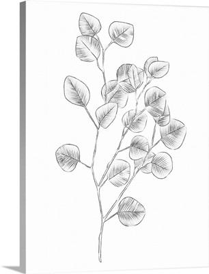 Eucalyptus Sketch III