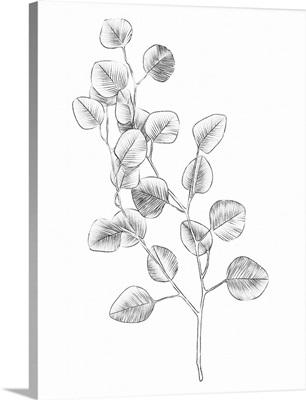 Eucalyptus Sketch IV