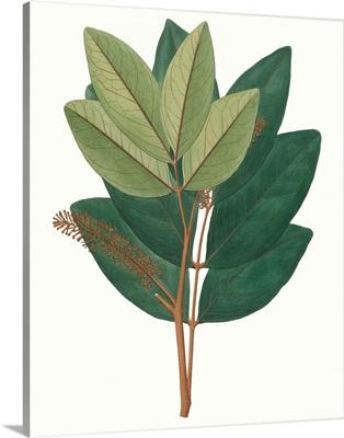 Fall Foliage IV