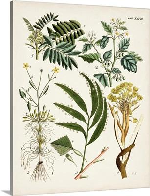 Fanciful Ferns I