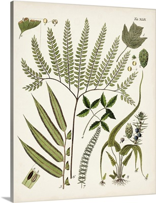 Fanciful Ferns III