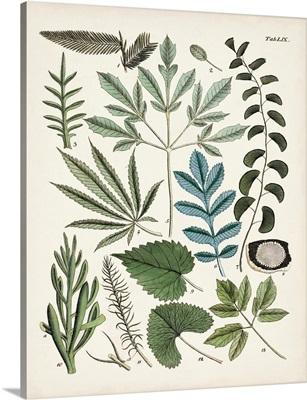 Fanciful Ferns VII