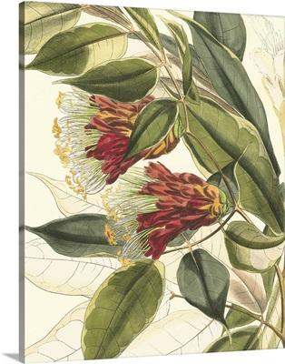 Fantastical Botanical II