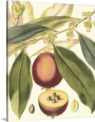 Fantastical Botanical III