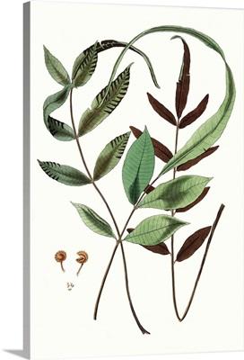 Fern Foliage II