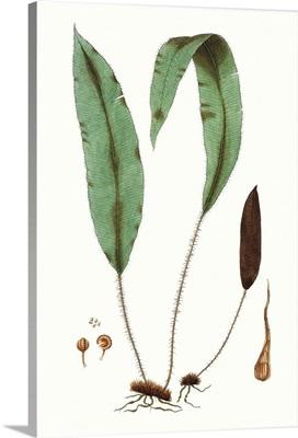 Fern Foliage III