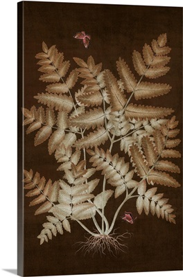 Ferns In Roasted Brown I