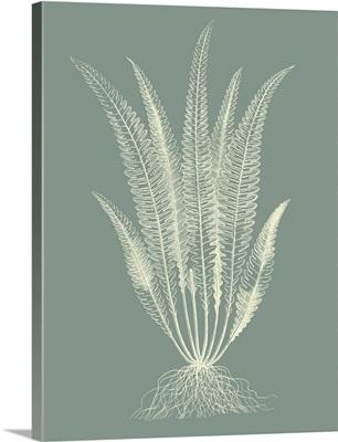 Ferns on Sage IV