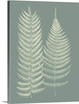 Ferns on Sage IX