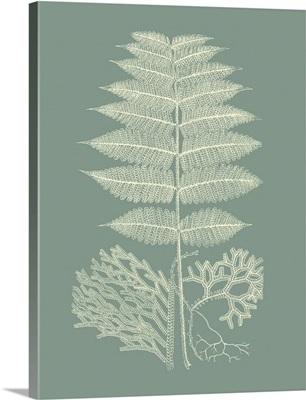 Ferns on Sage V