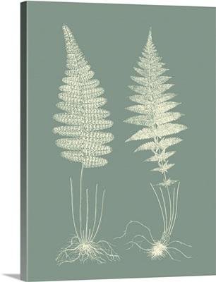 Ferns on Sage VI