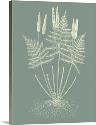 Ferns on Sage VII