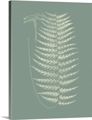 Ferns on Sage VIII