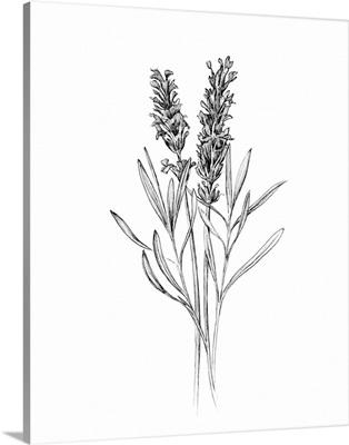 Field Flower II