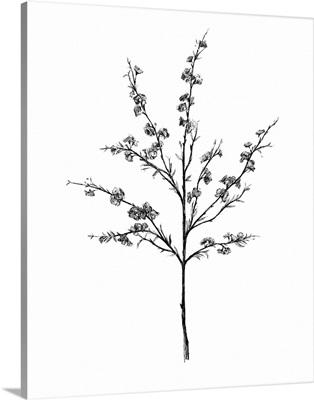 Field Flower III