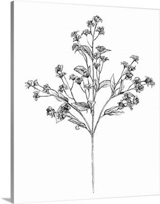 Field Flower IV