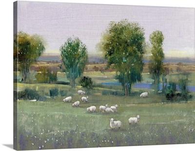 Field of Sheep I