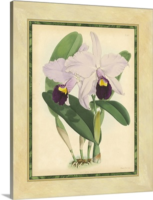 Fitch Orchid IV