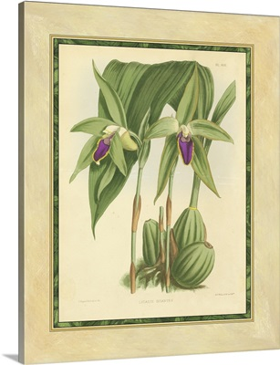 Fitch Orchid VI