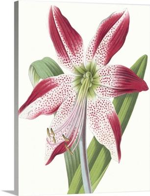 Floral Beauty II