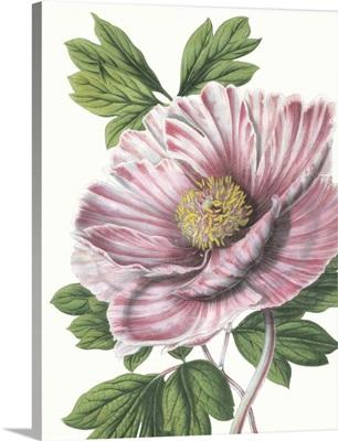 Floral Beauty VI