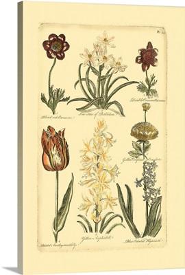 Floral Bounty IV