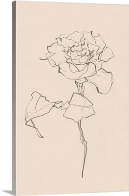 Floral Contour Study I