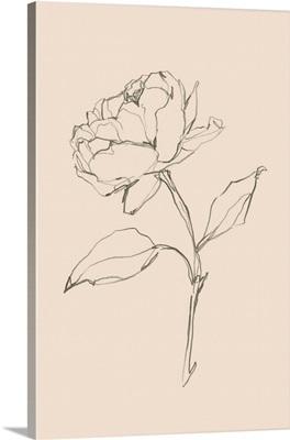 Floral Contour Study II