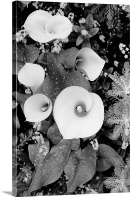 Floral Elegance II