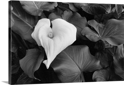 Floral Elegance III
