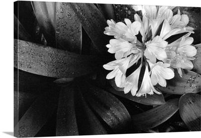 Floral Elegance IV