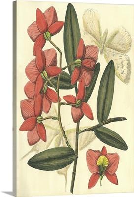 Floral Fantasia III
