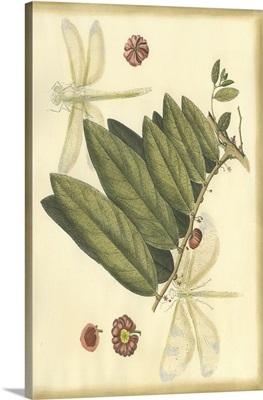 Floral Fantasia V