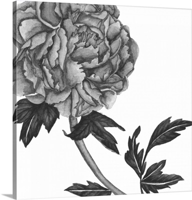 Flowers in Grey III