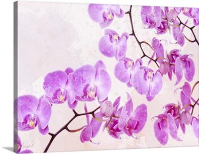 Fluttering Orchid I