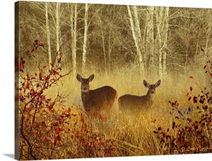 Deer Art Drawings Paintings Prints Photos Great Big Canvas