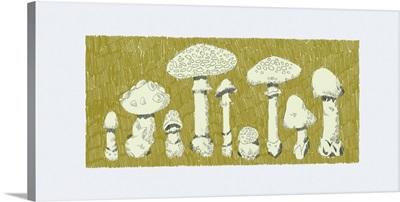 Forest Fungi I
