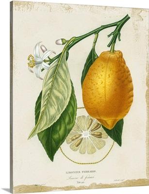 French Lemon II