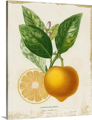 French Lemon III